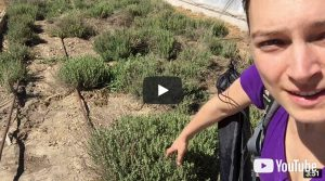 Video 020: A Tour through the Greenhouses of the Farm in Mona, Utah